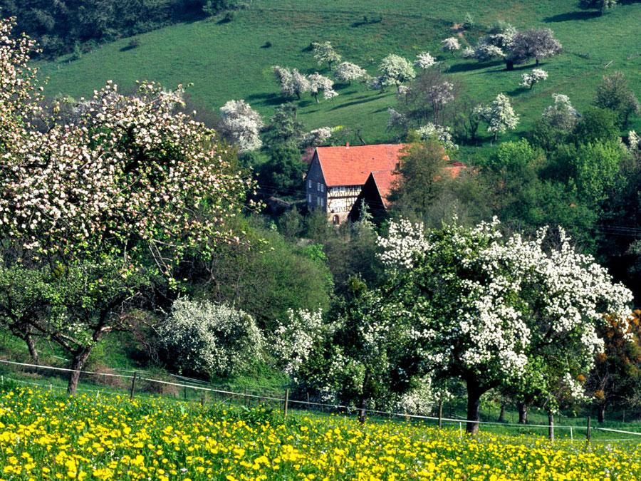 Bucher,-Bauernhaus-Frühling