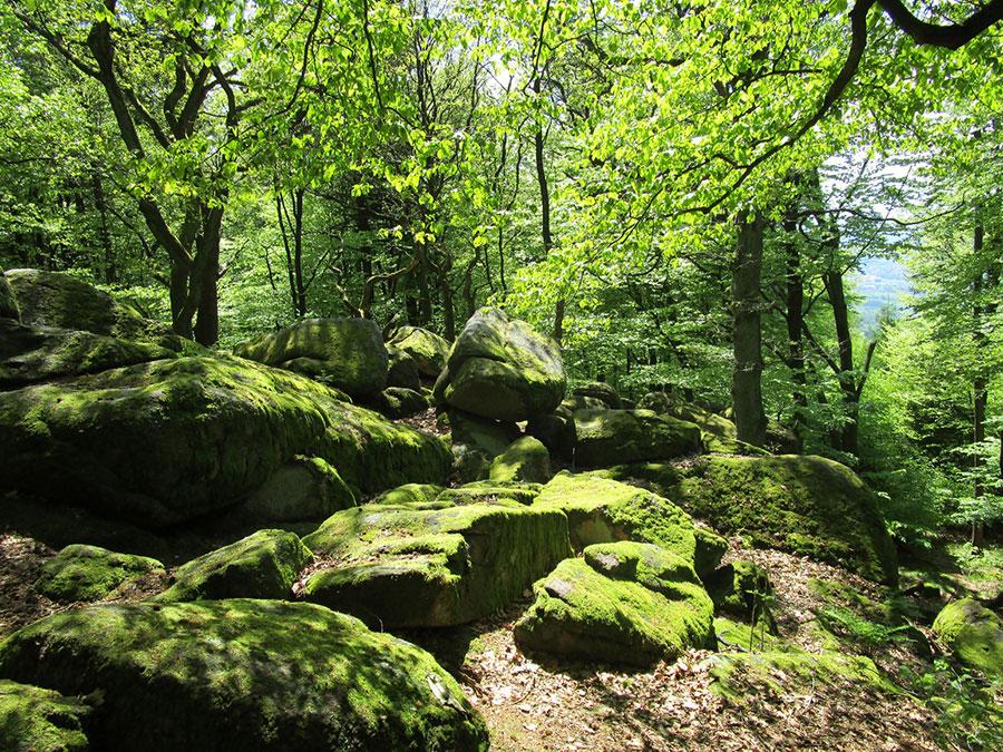 ZKÜ-17-05-14-Sternwanderung-07-klein